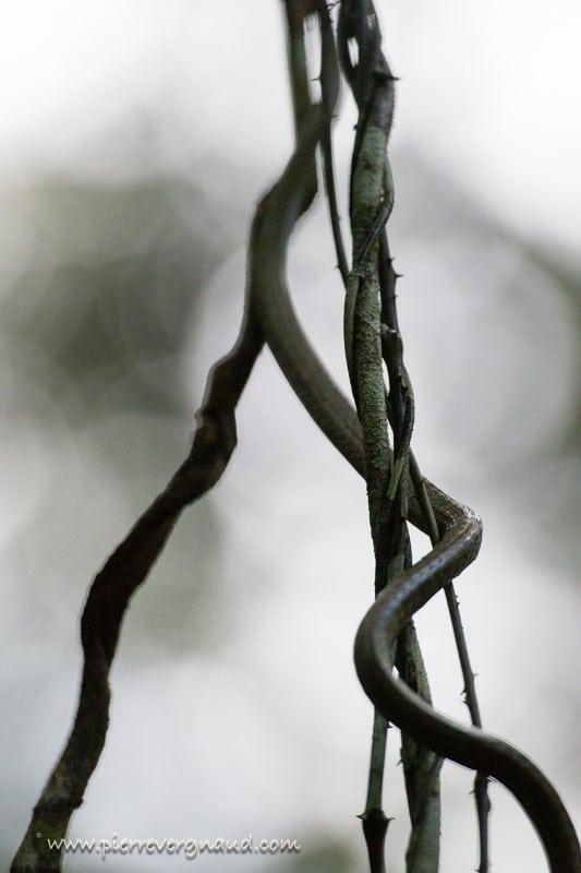 comment photographier serpents-3