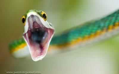 Comment photographier les serpents en toute sécurité ?