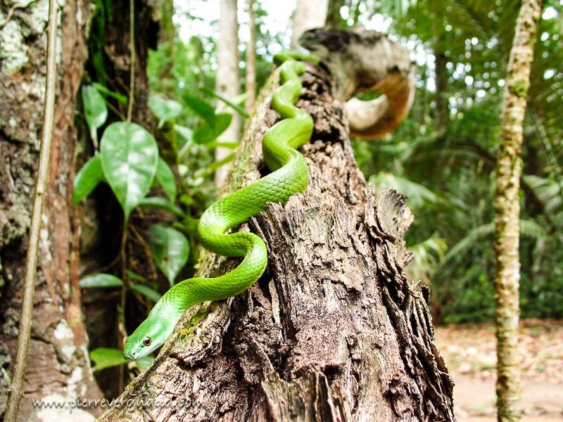 comment photographier serpents et reptiles au grand angle
